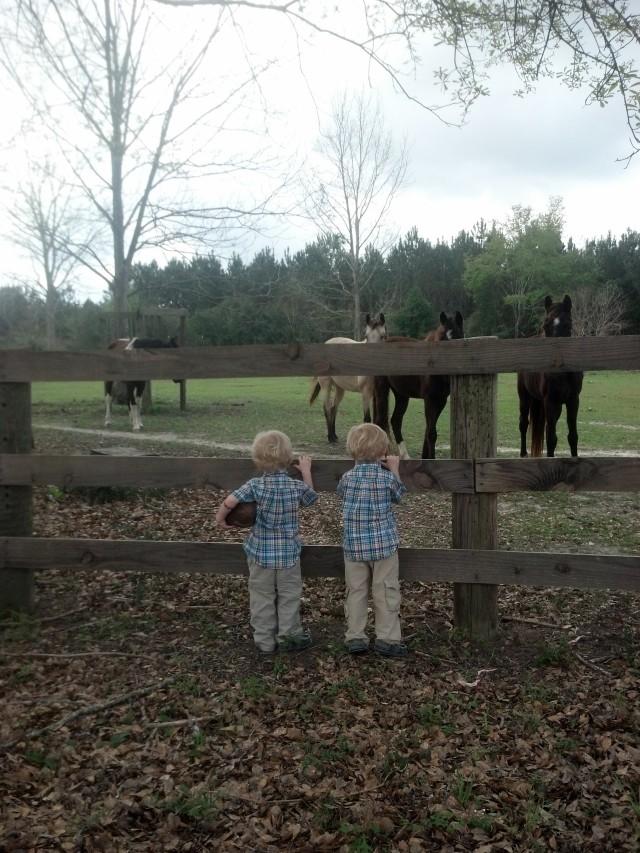 easterhorses